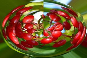 cherries-70810_1280